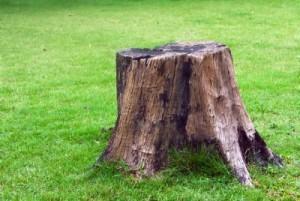 Dessouchage d'arbre 57 67