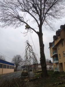 Abattage d'arbre par démontage 57 et 67