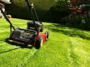 Tonte pelouse secteurs sarrebourg saverne entreprise for Tonte jardin