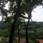 Élagueur en Moselle
