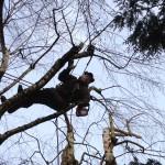 Élagage arbres en Moselle