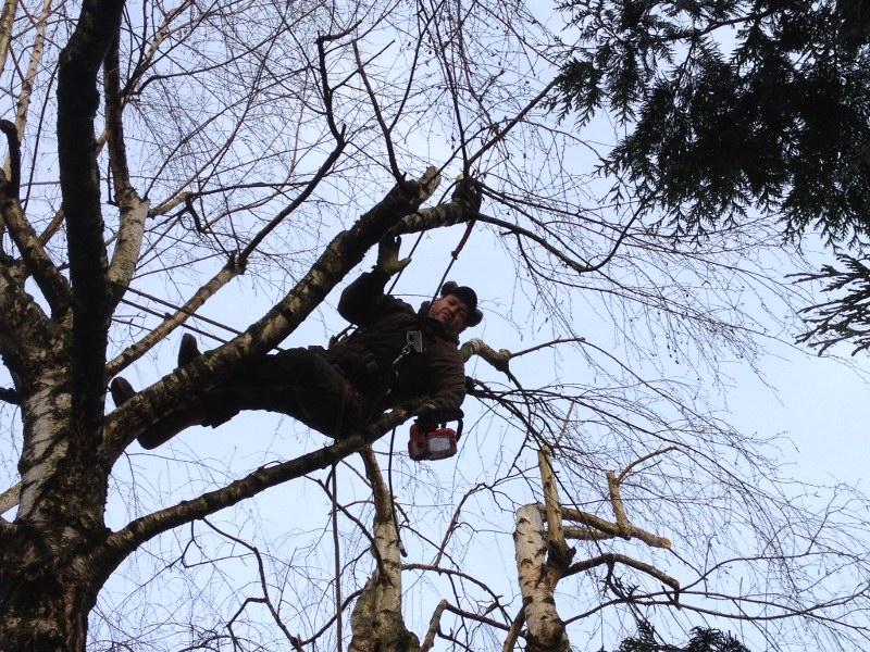 elagage arbre moselle